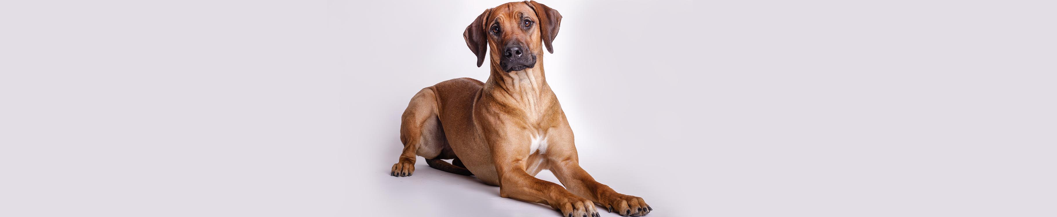 dog03